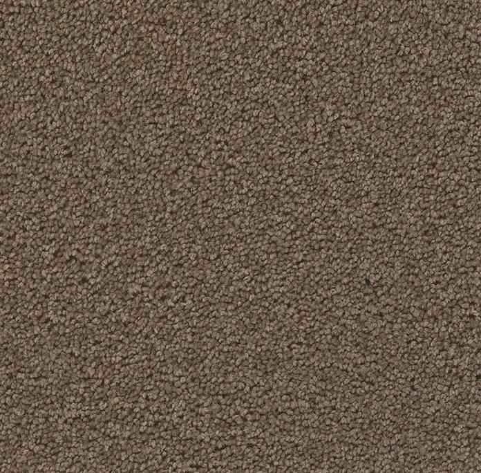 Broadcast Plus in Latte - Carpet by Engineered Floors